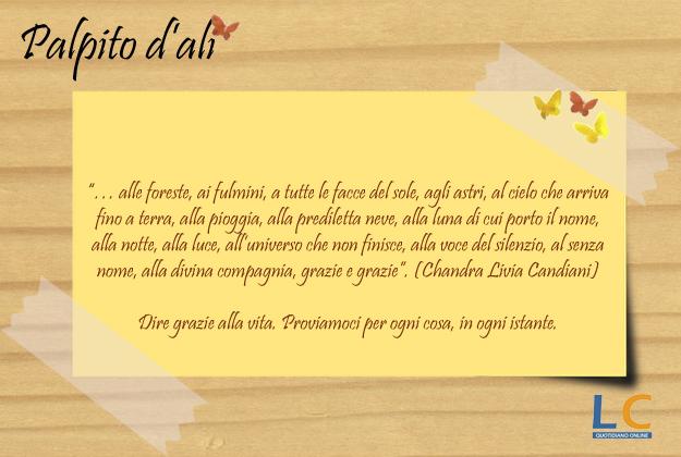 palpito_d_ali_002