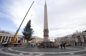 Pope Francis' Christmas tree