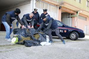 A Mesoraca Carabinieri arrestano una persona che aveva in casa oltre 31 kg marijuana