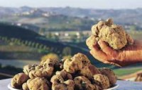 Alimentare. a scuola di tartufi dal Pollino alle Serre