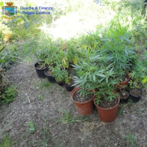 piante marjiuana