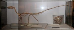 Unical espone scheletro dinosauro