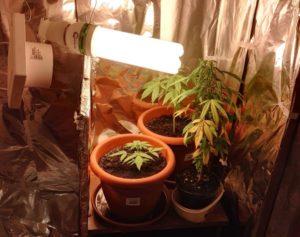 Coltivava marijuana nell'armadio, un arresto dei carabinieri a Falerna