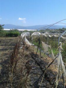 Incendiato terreno agricolo della cooperativa Progetto Sud a Lamezia