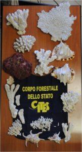 corallieconchiglie